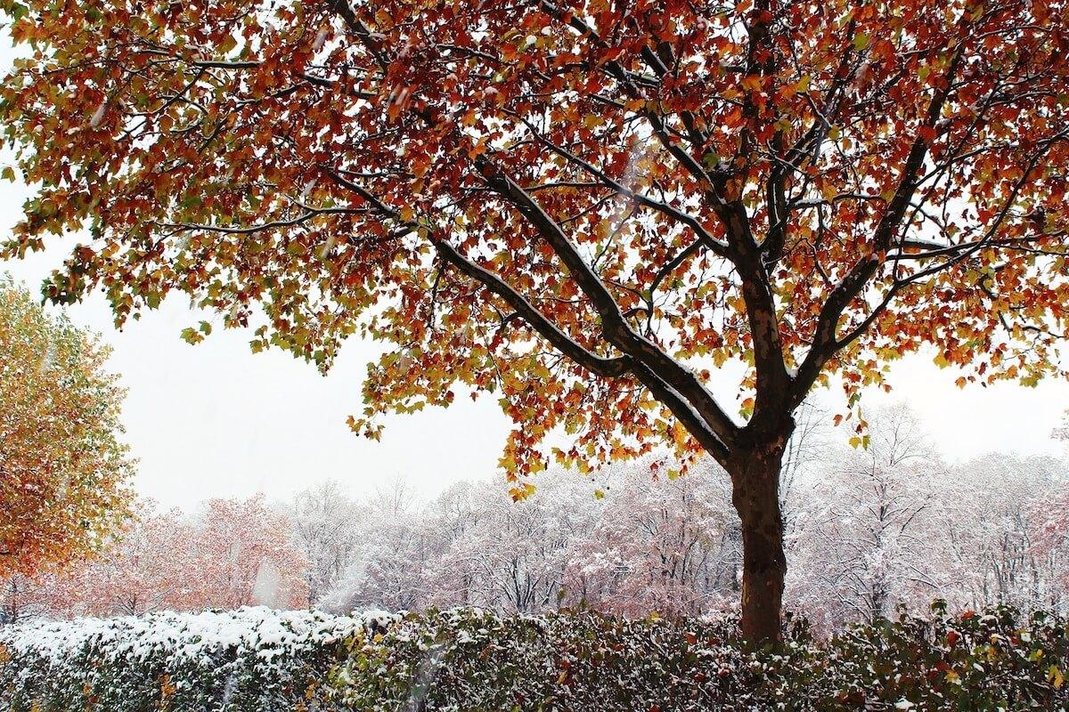 Herbstlicher Baum mit Schnee ©pixabay.com -https://pixabay.com/en/tree-autumn-winter-snow-1908750/