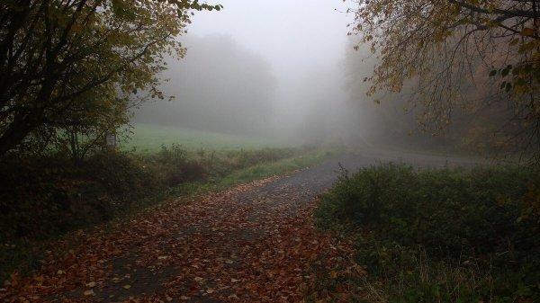 Nebeliger Herbsttag im Wald ©pixabay.com