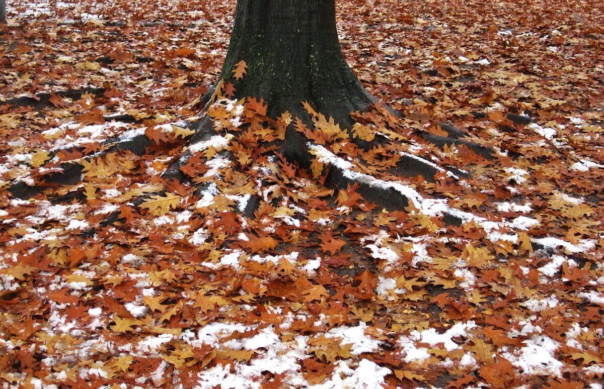 Schnee im Herbst ©pixabay.com - https://pixabay.com/en/first-snow-leaves-and-snow-1808642/