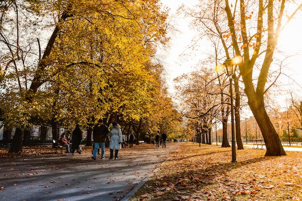 Herbstspaziergang ©pexels.com