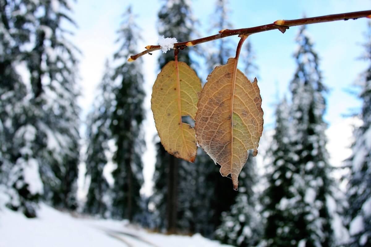 Herbstblätter mit Winterlandschaft im Hintergrund. ©pixabay.com
