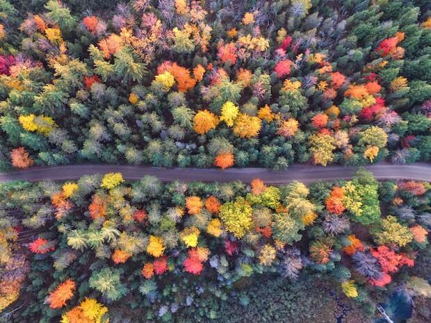 Bunter Wald mit Straße in der Mitte, Vogelperspektive. ©unsplash.com - https://unsplash.com/photos/Qy-CBKUg_X8