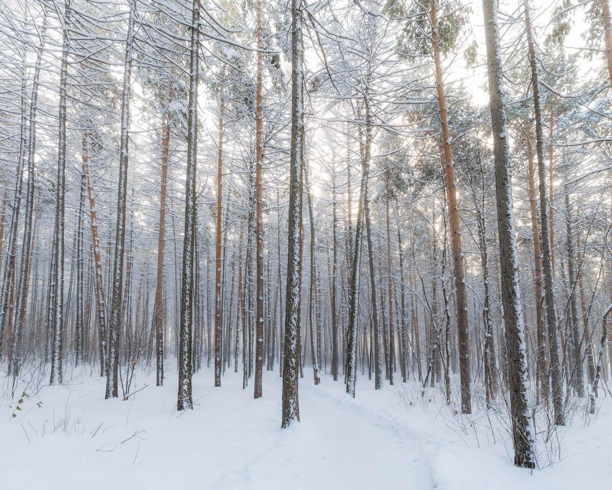 Verschneiter Wald. @unsplash