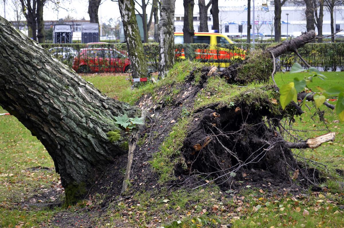 Sturmschäden in Deutschland. @shutterstock.com/Mickis-Fotowelt