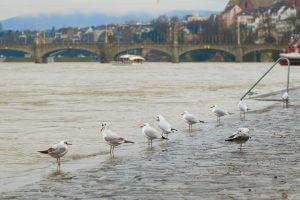 Hochwasser Rhein Basel © Hans-Jörg Walter