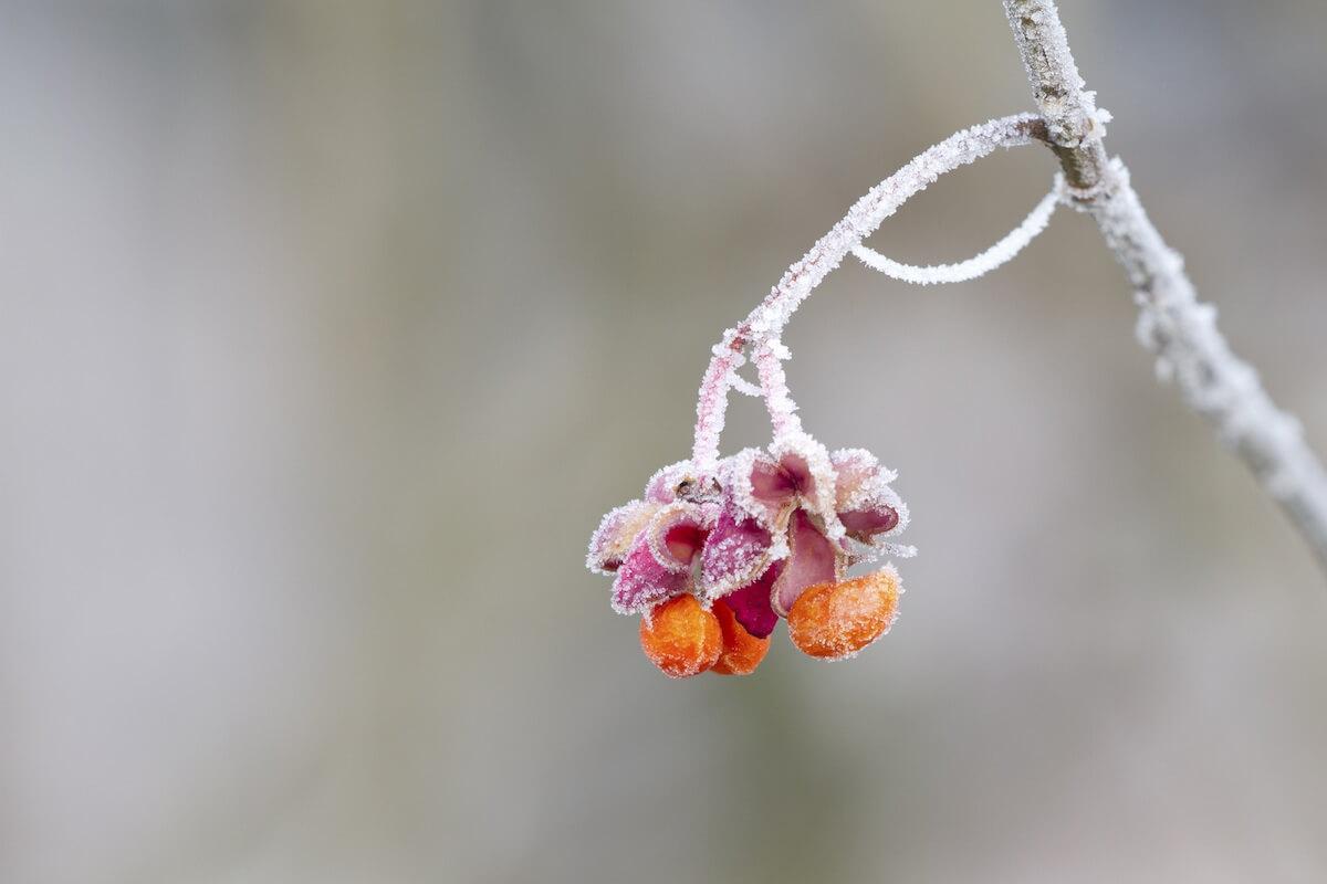 Eiskalter Start in den Frühling. @pexels.com