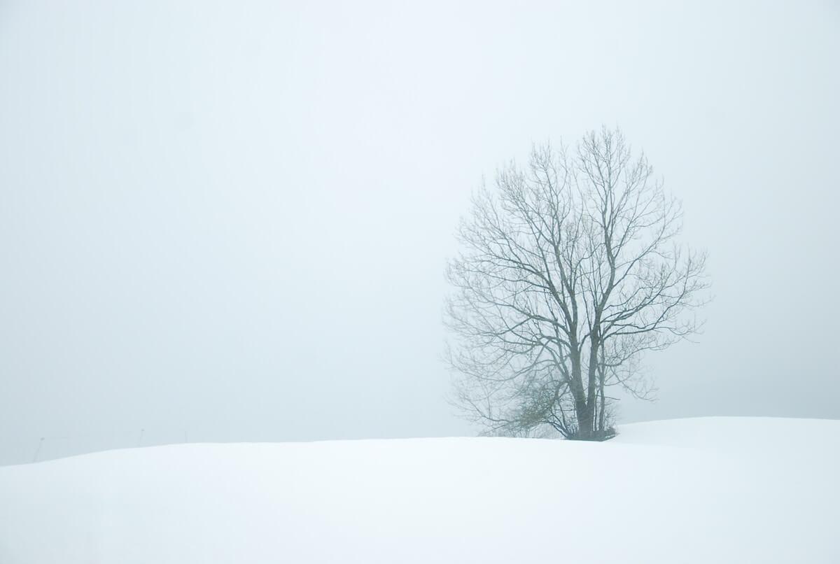 Einsamer Baum in Winterlandschaft. @unsplash.com