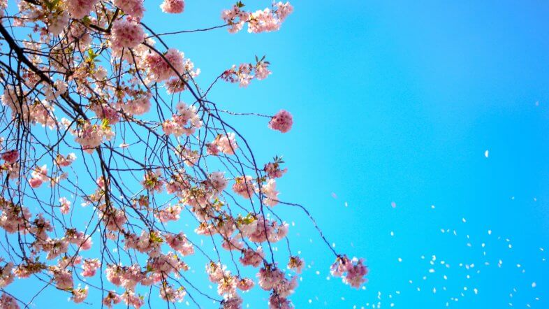 Frühlingshaftes Wochenende