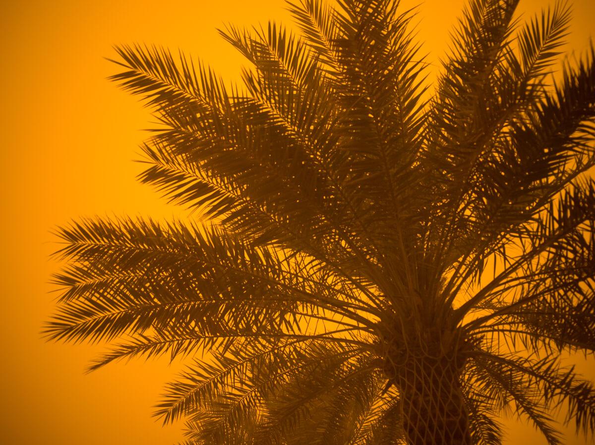 Sandsturm und Palme ©HansMusa