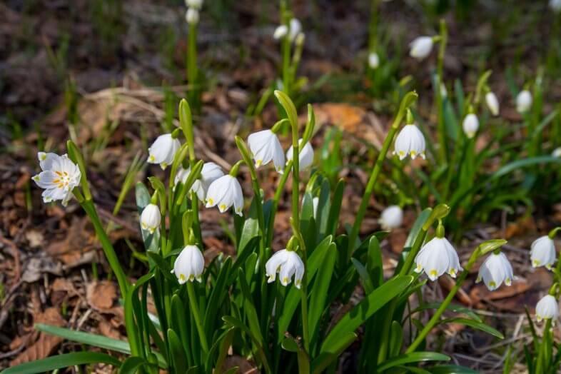 Erste Frühlingszeichen