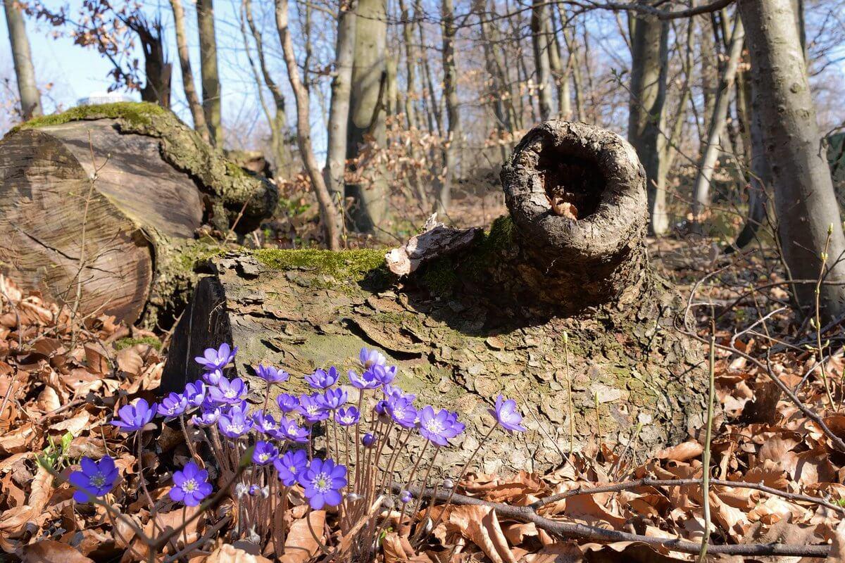 Frühling. © Nikolas Zimmermann
