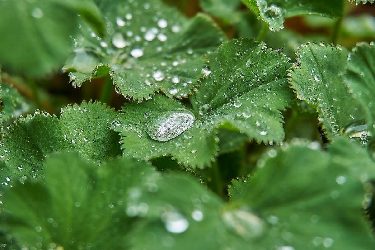 Kräftiger Frühlingsregen © pixabay