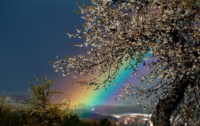 Regenbogen im Frühling
