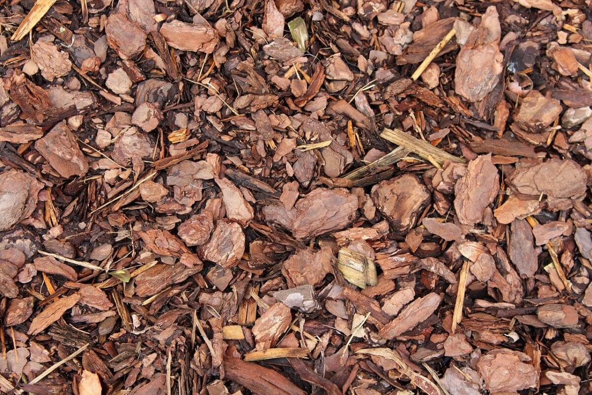 Trockener Waldboden © pixabay