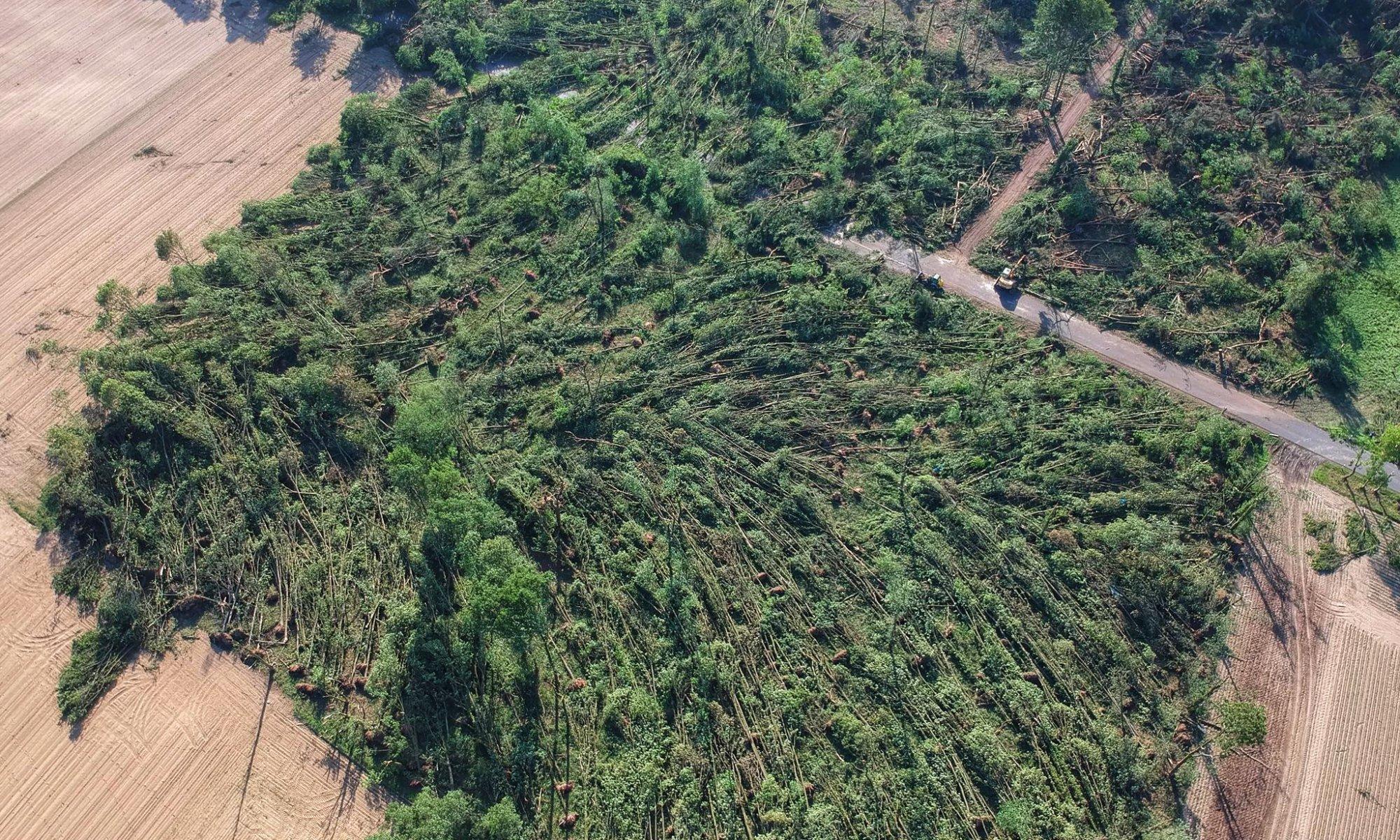 Luftbildaufnahmen von umgestürzten Bäumen © Marco Bayer