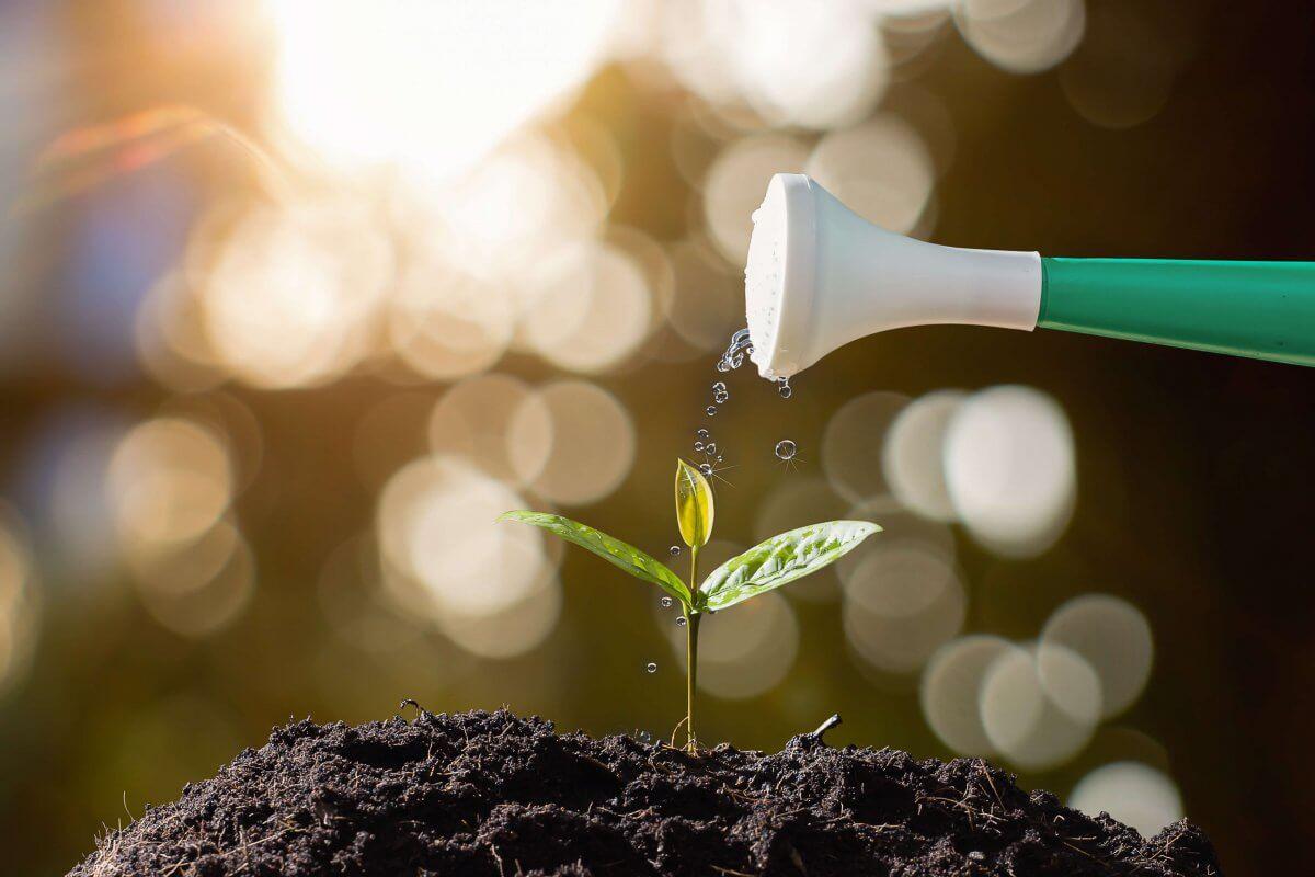 Zartes Pflänzchen wird mit Gießkanne bewässert ©shutterstock