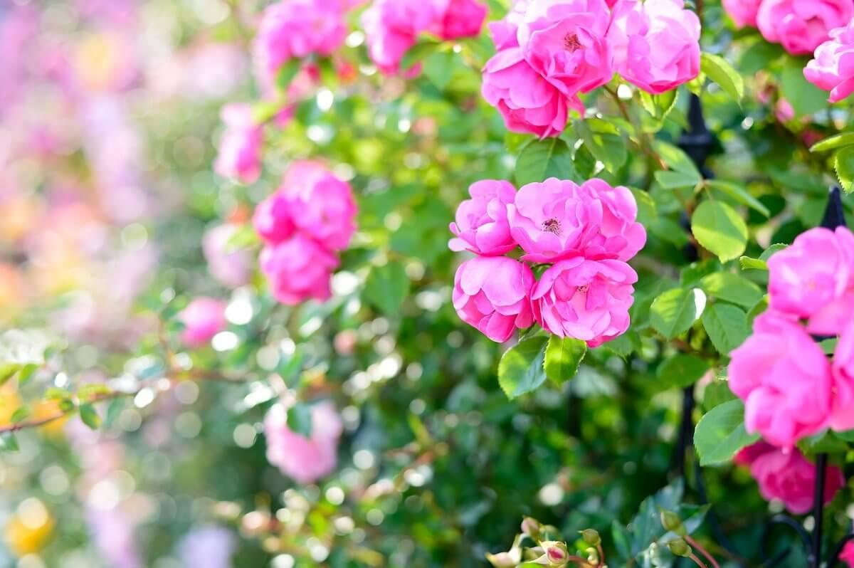 Frühsommerliche Blütenpracht im Mai © pixabay