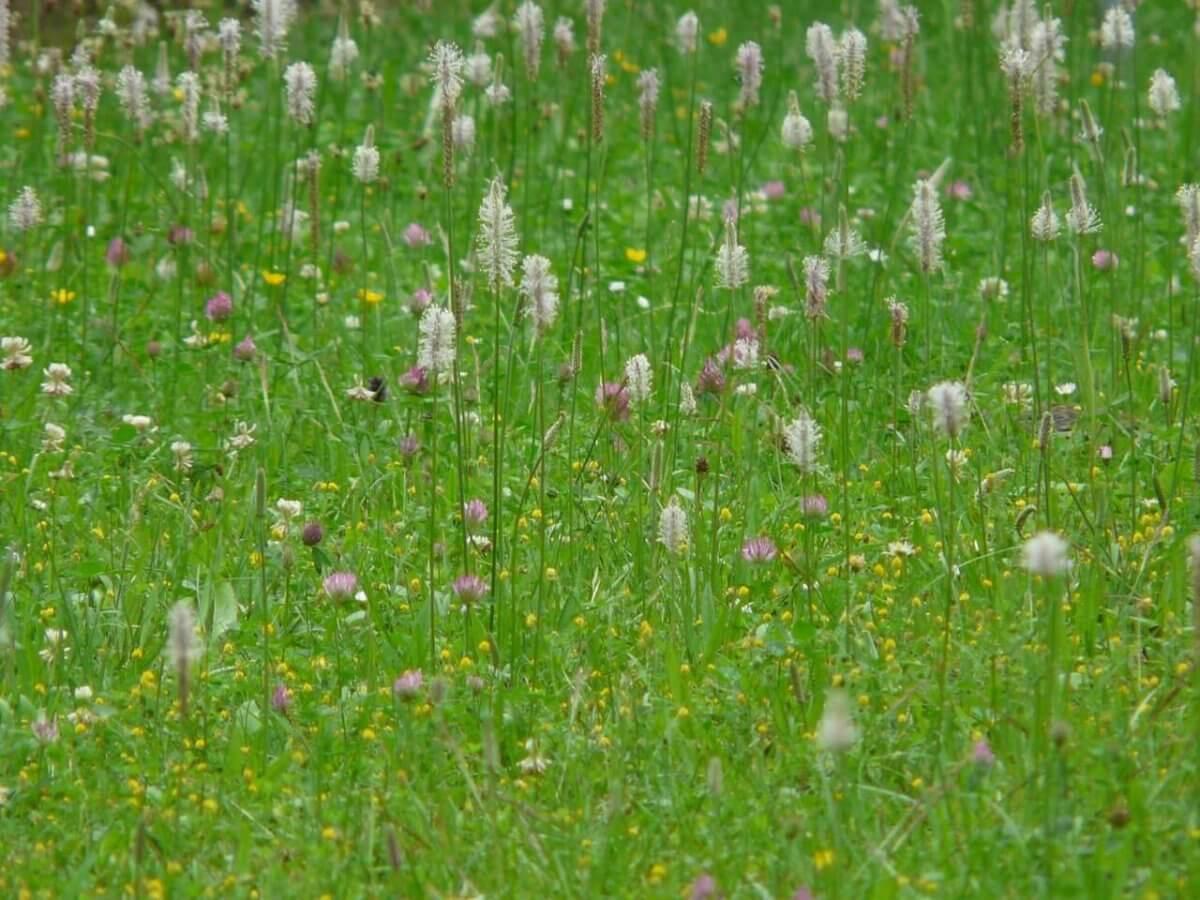 Gräser Pollen
