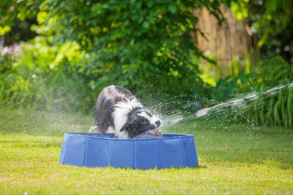 Die Hundstage stellen die heißeste Zeit des Jahres dar.
