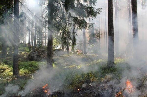 Hitze und Feuer machen den Menschen in Kalifornien zu schaffen.