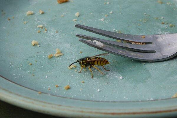 Die besten Tipps gegen Wespen