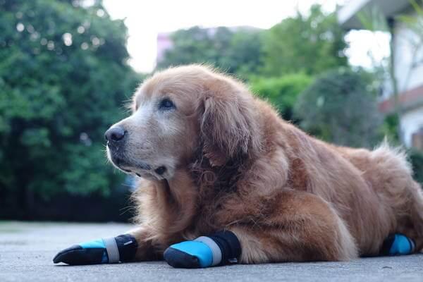 Hund mit Schuhe