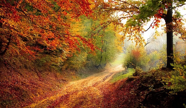 Vergangene Nacht hat der Herbst begonnen.