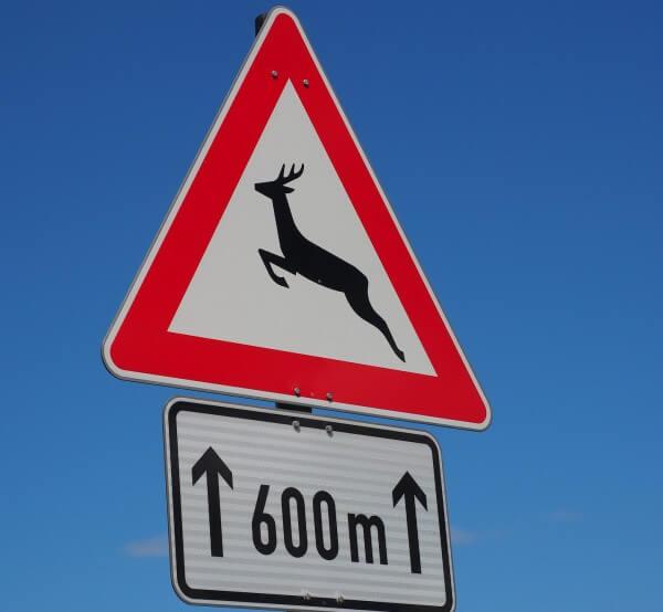 Gefahr von Wildwechsel auf den Straßen.