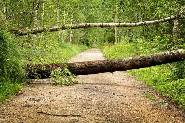 """Umgestürzter Baum im Wald durch """"Fabienne""""."""