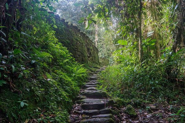 Exemplarisches Beispielbild, tropischer Regenwald @ alschim on VisualHunt