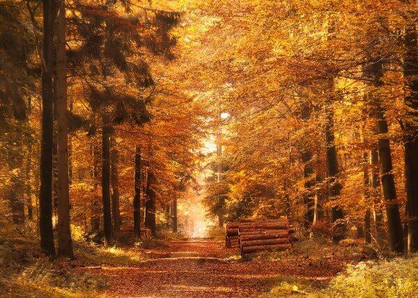 Im Oktober sorgen Vegetation und Sonne für goldenes Licht