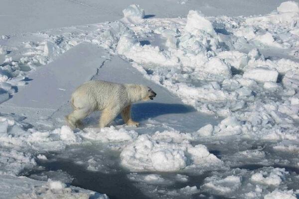 Es gibt deutlich weniger Meereis als üblich in der Arktis