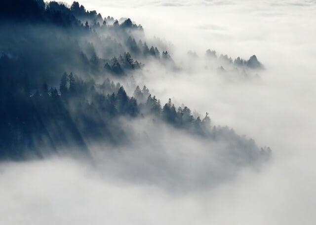 Graue Stimmung durch den Nebel im Herbst.