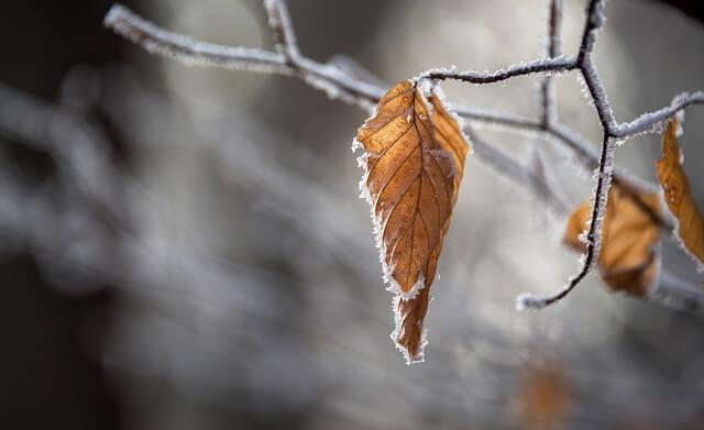Temperaturen unter dem Gefrierpunkt sind im November schon wahrscheinlich.