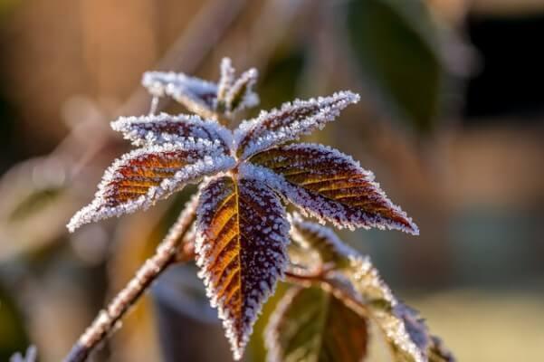 Frost mit Raureif im Herbst