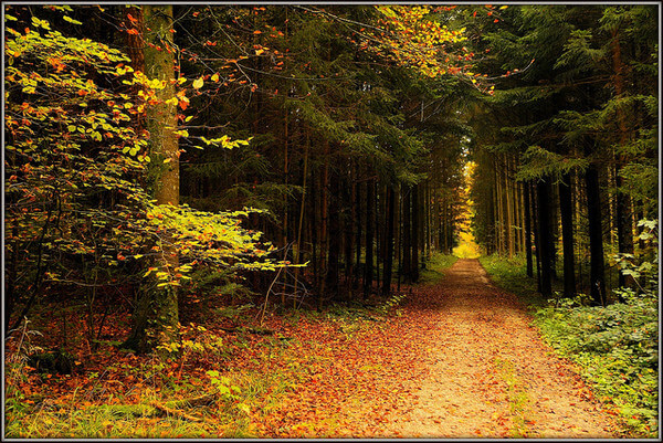 Spaziergang im herbstlichen Wald - Photo credit: jd.echenard on Visualhunt.com / CC BY-ND