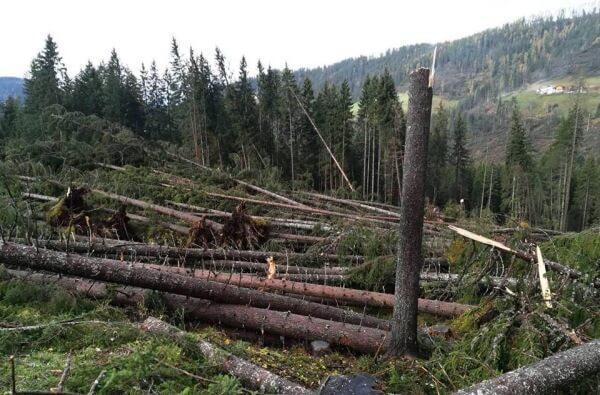 Tief VAIA hinterlässt Windwurf und schwere Schäden im Alpenraum