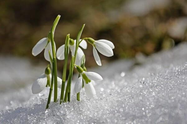Hoch DORIT bringt den Vorfrühling