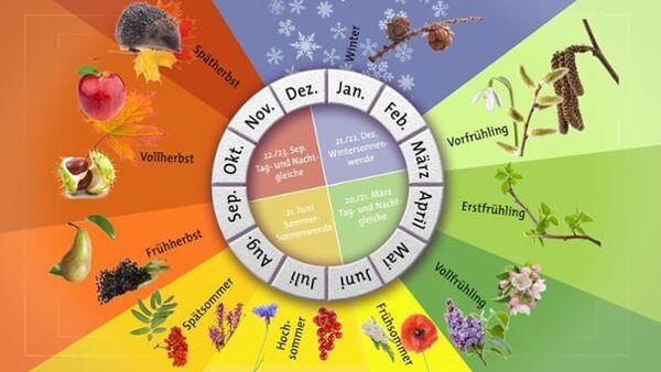 Der phänologische Kalender