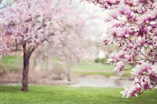 Frühlingsbeginn in Europa