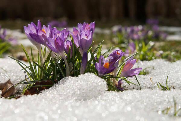 Der Frühling setzt sich durch