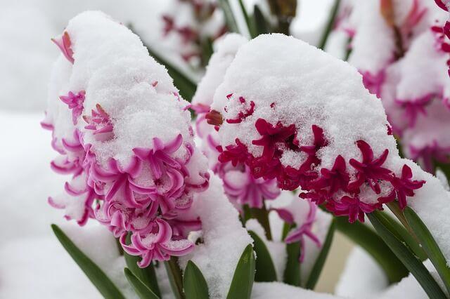 Lokal kann es am Wochenende noch einmal schneien.
