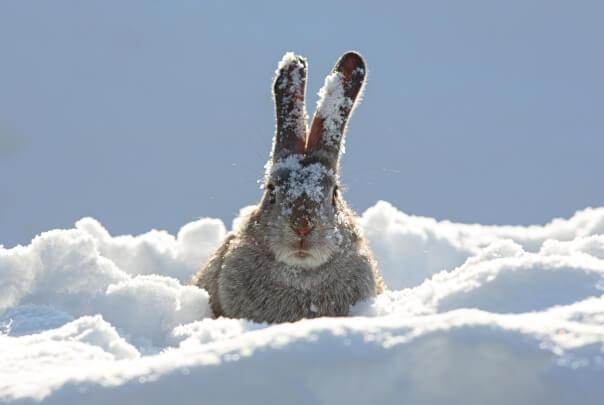 Osterextreme: Von Schneefall bis hin zu Sommerwetter