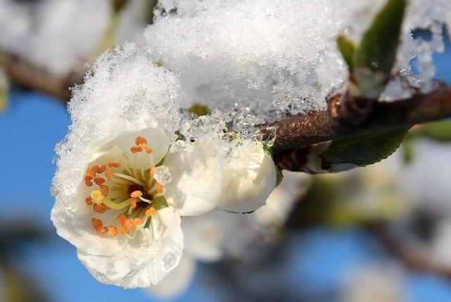 Später Schnee im Frühling ist keine Seltenheit.