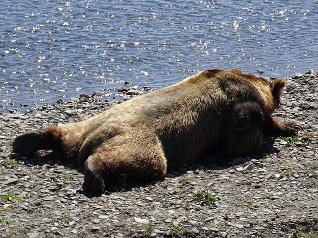 Da kommt der Bär ins Schwitzen