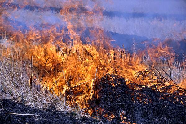 Seltenes Ereignis: Flurbrände in Grönland