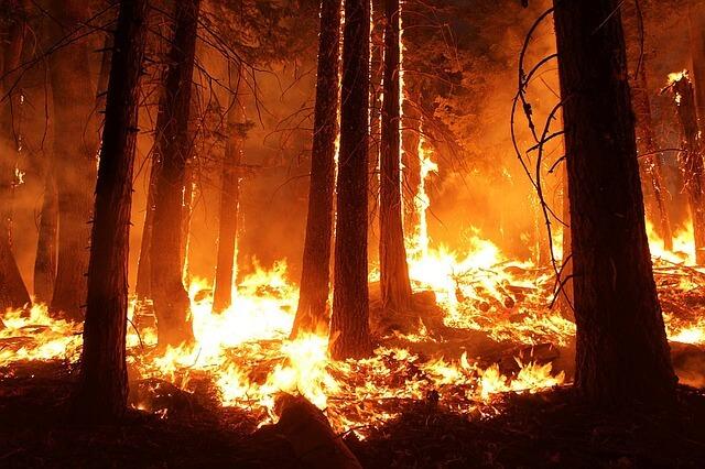Großflächige Waldbrände im hohen Norden.