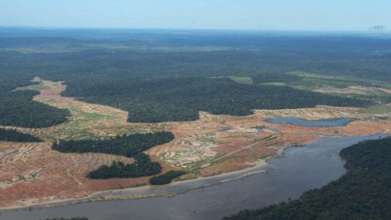 Gerodete Waldflächen im Amazonas ©dpa