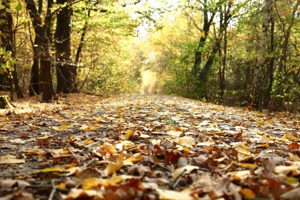 Der Herbst und die Trockenheit