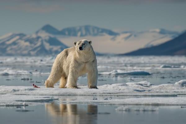 Arktisches Meereis erreicht Minimum